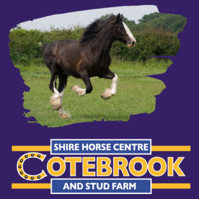 COTEBROOK SHIRE HORSE ANNA - Softstyle® adult ringspun t-shirt Design